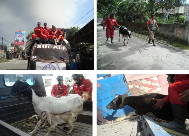 Evakuasi hewan oleh Pro Fauna