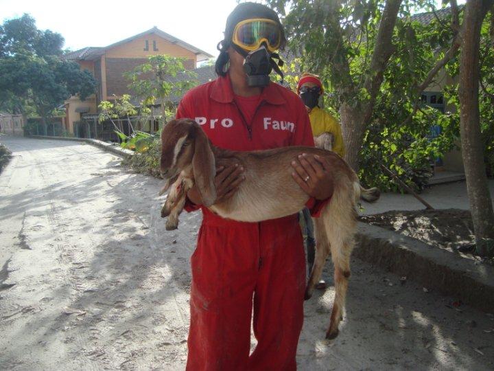 Pro Fauna